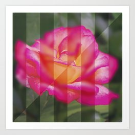 Rose Flower From A New Angle Art Print