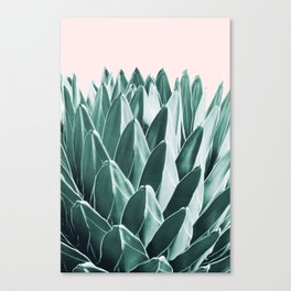 Agave Chic #10 #succulent #decor #art #society6 Canvas Print