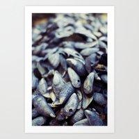 Shells in Maine Art Print