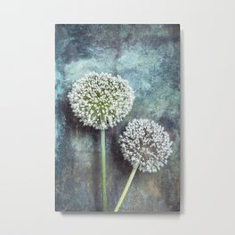 Allium Flowers Metal Print