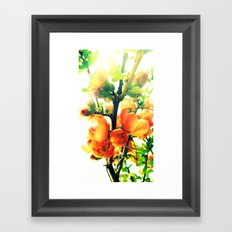 Softly Quince Framed Art Print