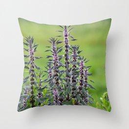Motherwort - Leonurus cardiaca 4018 Throw Pillow