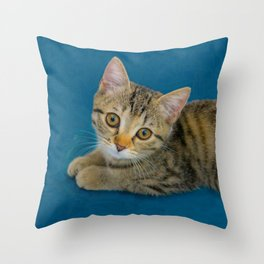 Hello Cutie  -  Baby cat Throw Pillow