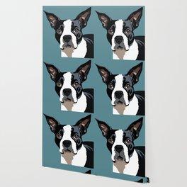 Mendo the Boston Terrier Wallpaper