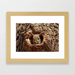 An Eastern Grey Squirrel Peeks out of a Hole - Photography Framed Art Print