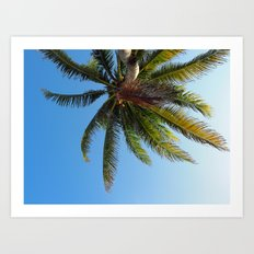 Palm Tree Akumal Beach Art Print