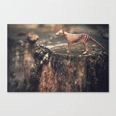The Last Thylacine Canvas Print