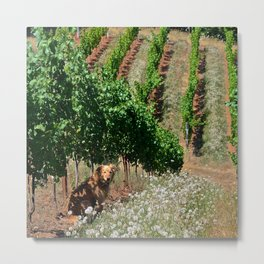 gracie in the vineyard Metal Print