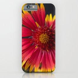 Indian Blanket Sunflower iPhone Case