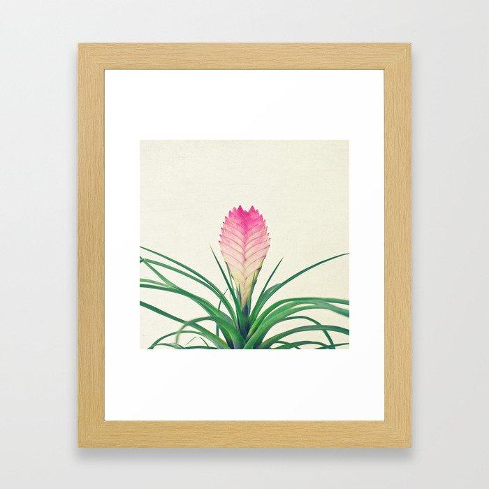 Bromelia II Framed Art Print