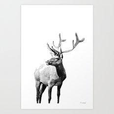 Mountain Elk Art Print