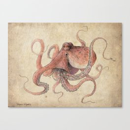 Octopus Vulgaris Canvas Print