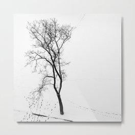 The Winter Dream of Ta Prohm Metal Print