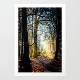 Early morning in the New Forest. Art Print