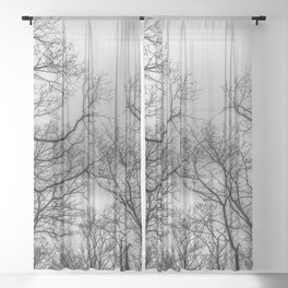 Black and white naked trees silhouette Sheer Curtain