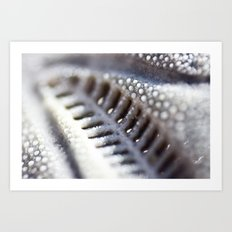 Sea Urchin Skeleton Art Print