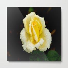 Rosa Eternal Flame Rose Metal Print