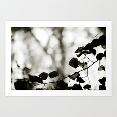 shadowplay Art Print