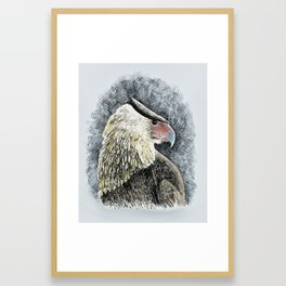 Caracara Framed Art Print