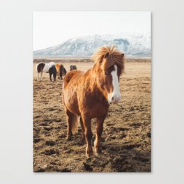 Friendly Iceland Friends Canvas Print
