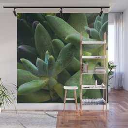 Exotic Succulents in Glorious Greens and Aqua Splashes Wall Mural