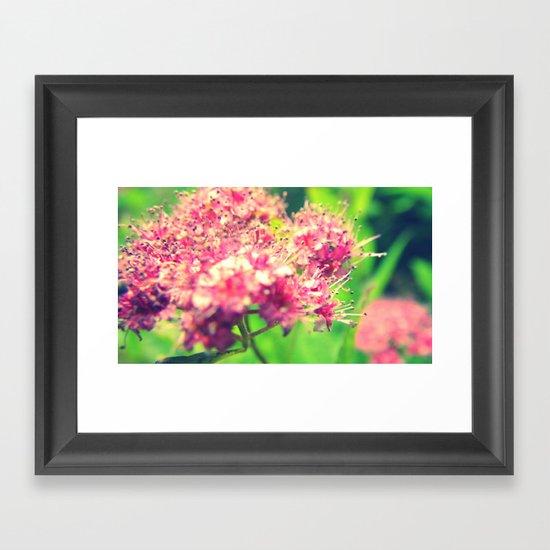 Florid Fuchsia Framed Art Print