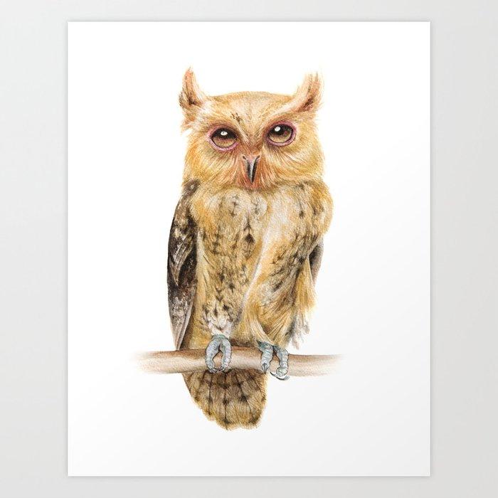animals owl watercolour print philippine scops owl painting