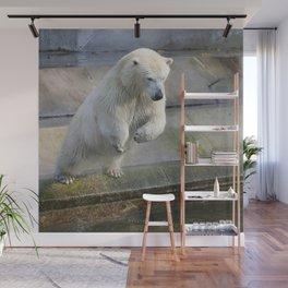 Polar_Bear_2015_0301 Wall Mural