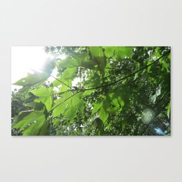 Sky through Big Leaf Canvas Print