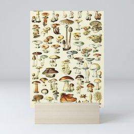 Vintage Mushroom & Fungi Chart Textless Adolphe Millot Mini Art Print