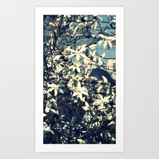 White magnolia tree Art Print