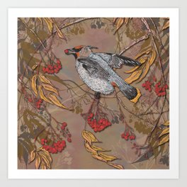Waxwing Winter Feast Art Print