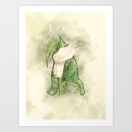 Vintage Calla #floral #watercolor #society6 Art Print