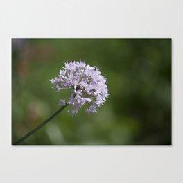Small Bouquet Canvas Print