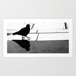 Pigeon Having a Late Afternoon Stroll Art Print