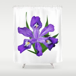 Dwarf crested Iris, Iris cristata on white Shower Curtain