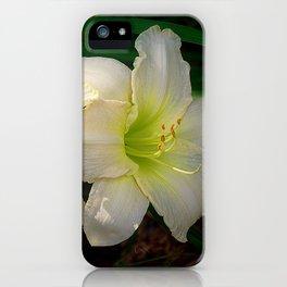 Glowing white daylily flowers - Hemerocallis Indy Seductress iPhone Case