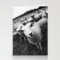 sheep Stationery Cards featuring Sheep by Falko Follert Art-FF77