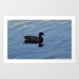 Mallard Duck with Water Silhouette Photo by Rosie Foshee Art Print