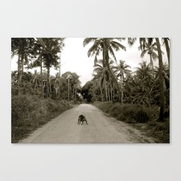 Tonga Dog Canvas Print
