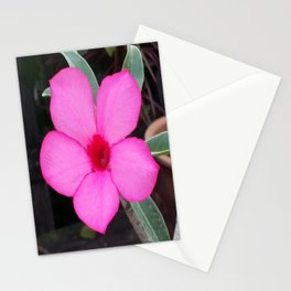 A BLUSH OF PINK Stationery Cards