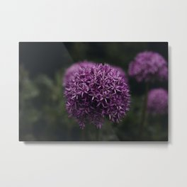 Flower Photography by Xuan Nguyen Metal Print