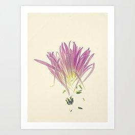 Love me, Dhalia - Botanical Print Art Print