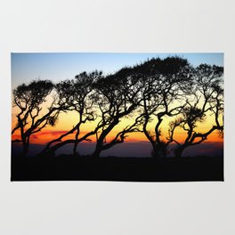 Sunset Through The Oaks Rug