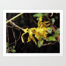Orquídea Amarilla Art Print