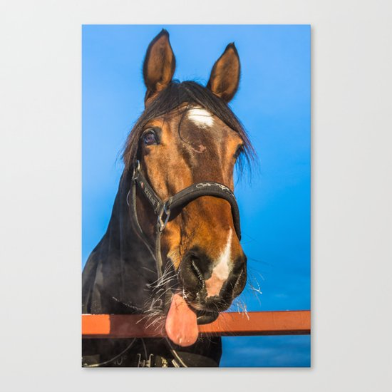 Horse Albert Canvas Print