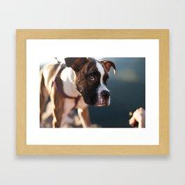 Morning friend Framed Art Print