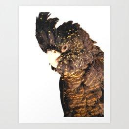 Black cockatoo illustration Art Print