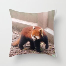Chongqing Red Panda | Panda roux Throw Pillow