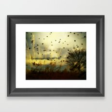 Bird Sunset Framed Art Print